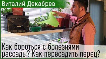 Дачные сезоны с Виталием Декабревым (1 апреля 2017)