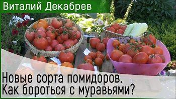 Дачные сезоны с Виталием Декабревым (12 августа 2017). Дегустация томатов.
