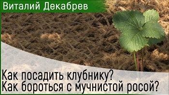 Дачные сезоны с Виталием Декабревым (26 августа 2017)