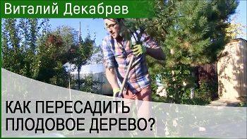 Дачные сезоны с Виталием Декабревым (23 сентября 2017)