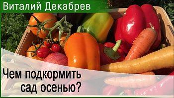 Дачные сезоны с Виталием Декабревым (9 сентября 2017)