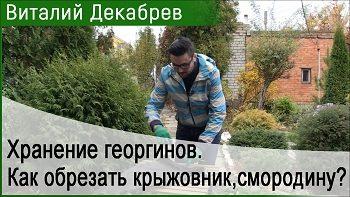Дачные сезоны с Виталием Декабревым (21 октября 2017)