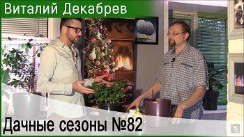 Дачные сезоны с Виталием Декабревым (2 декабря 2017)