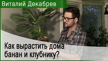 Дачные сезоны с Виталием Декабревым (18 ноября 2017)