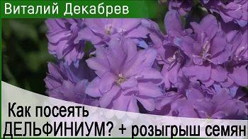 Дачные сезоны с Виталием Декабревым (16 декабря 2017)