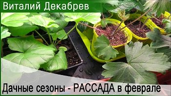 Дачные сезоны с Виталием Декабревым (рассада)