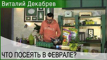 Дачные сезоны с Виталием Декабревым (10 февраля 2018)