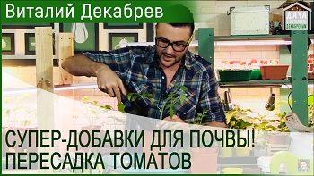 СУПЕР-ДОБАВКИ ДЛЯ ПОЧВЫ! Как приготовить СУПЕР-ГРУНТ для пересадки томатов?