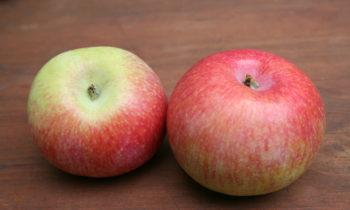 Яблоня сорта КОНФЕТНОЕ