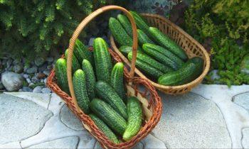 Правильный компост – эффективное удобрение.