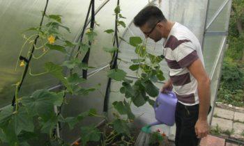 БАКТЕРИИ для экологически чистого урожая