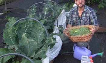Как вырастить богатый урожай? БИОГУМУС — экологически чистое удобрение.