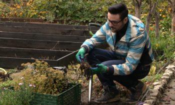 Как хранить георгины зимой?