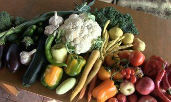 Натуральная подкормка для супер урожая
