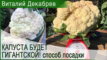 Дачные сезоны с Виталием Декабревым (5 мая 2018)
