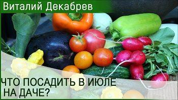 Что посадить в июле на даче и получить урожай?