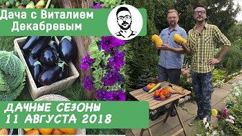 Дачные сезоны с Виталием Декабревым (11 августа 2018)