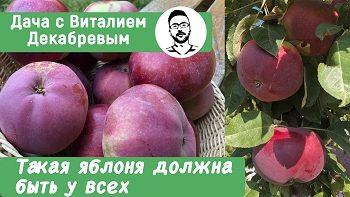 Такой сорт яблони должен быть у всех!
