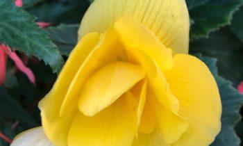 Этот цветок поможет в личной жизни.