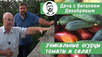 Уникальные огурцы, помидоры и салат российской селекции!