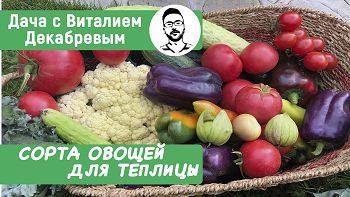 Лучшие сорта овощей для теплицы!