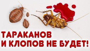 Как избавиться от тараканов и клопов? Два надежных способа.