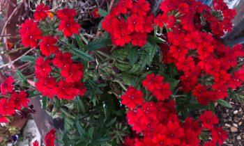 Сроки посева популярных цветочных культур на рассаду