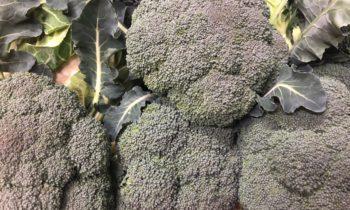 Отличный сорт брокколи