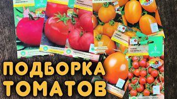 Хорошие сорта и гибриды томатов!