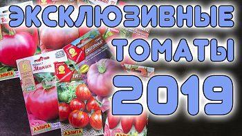 Эксклюзивные томаты 2019 + розыгрыш на моем ютуб-канале!