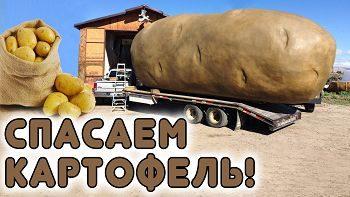 Картофель снова даст гигантский урожай, если сделать это!