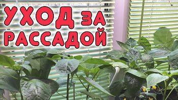 Как помочь растениям после пересадки?