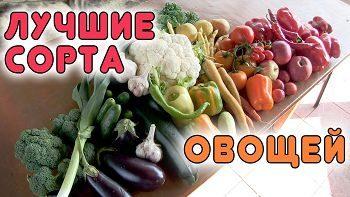 СУПЕР ХИТЫ! Лучшие сорта овощей для открытого грунта от Семко-Самара