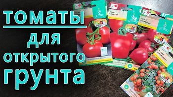 Какие томаты посеять для открытого грунта?