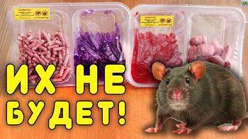 Простой способ избавиться от крыс и мышей на даче