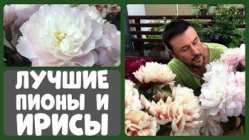 Лучшие сорта пионов и ирисов 2019! Выставка в ботаническом саду МГУ